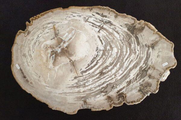 Couchtisch versteinertes Holz 32295