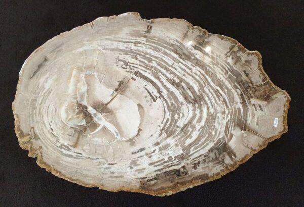 Couchtisch versteinertes Holz 32296