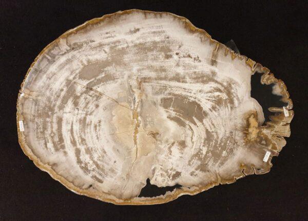 Couchtisch versteinertes Holz 32297