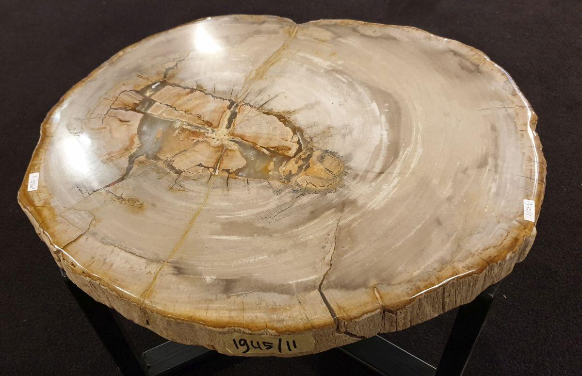 Couchtisch versteinertes Holz 32300