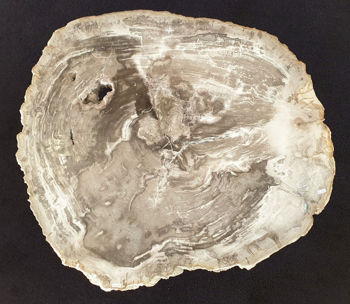 Mesa de centro madera petrificada 32205