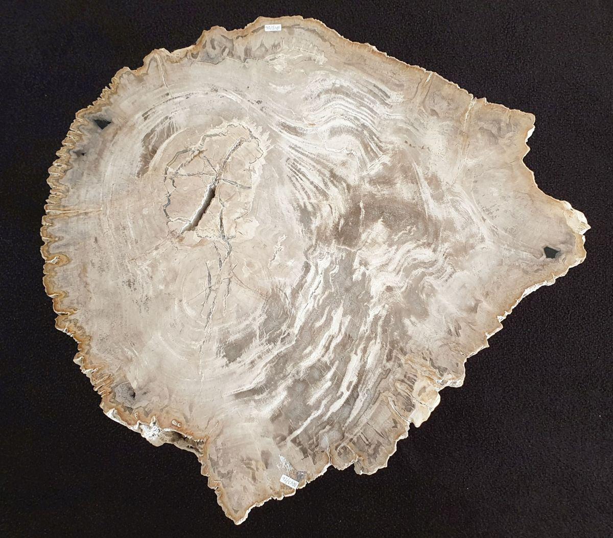 Mesa de centro madera petrificada 32212