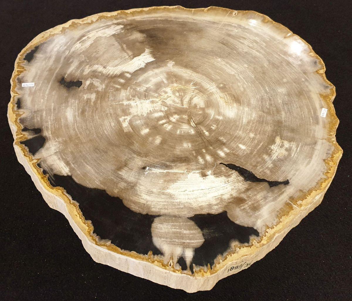 Mesa de centro madera petrificada 32229