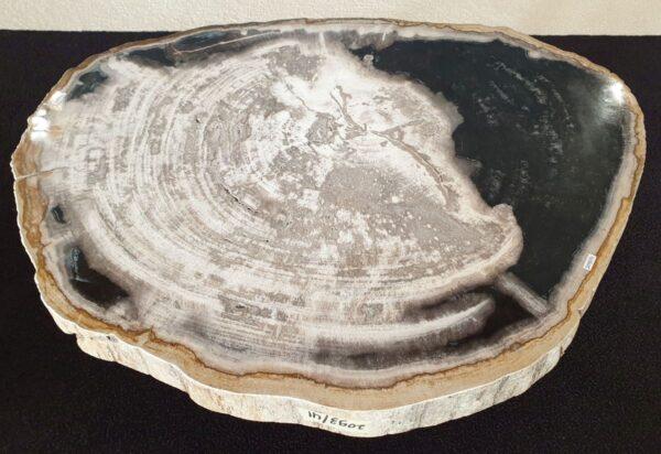 Mesa de centro madera petrificada 32265