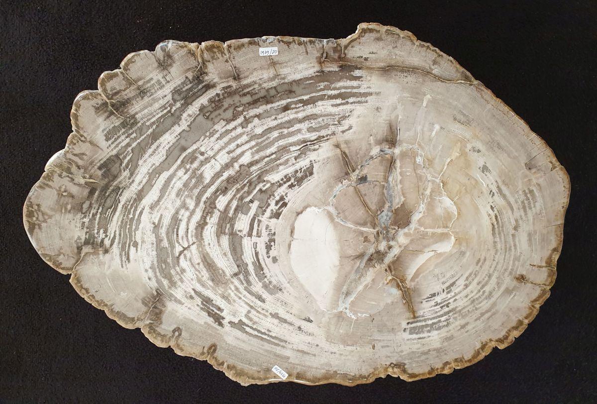 Mesa de centro madera petrificada 32294
