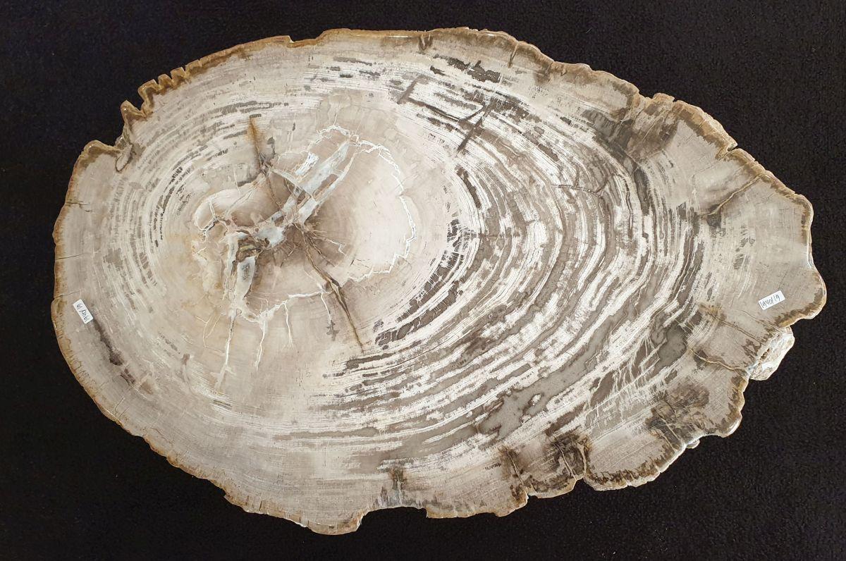 Mesa de centro madera petrificada 32295