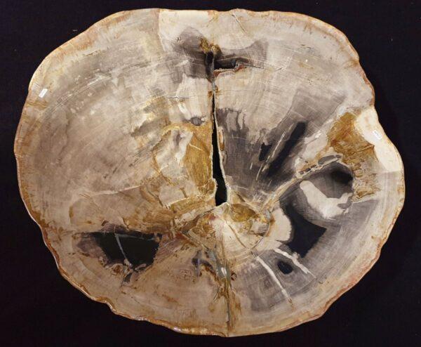 Mesa de centro madera petrificada 32332