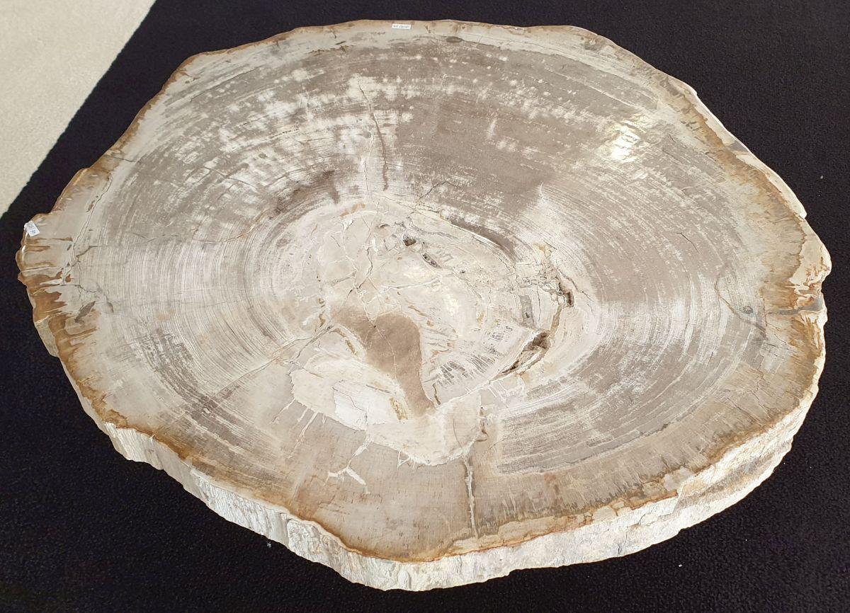 Salontafel versteend hout 32209