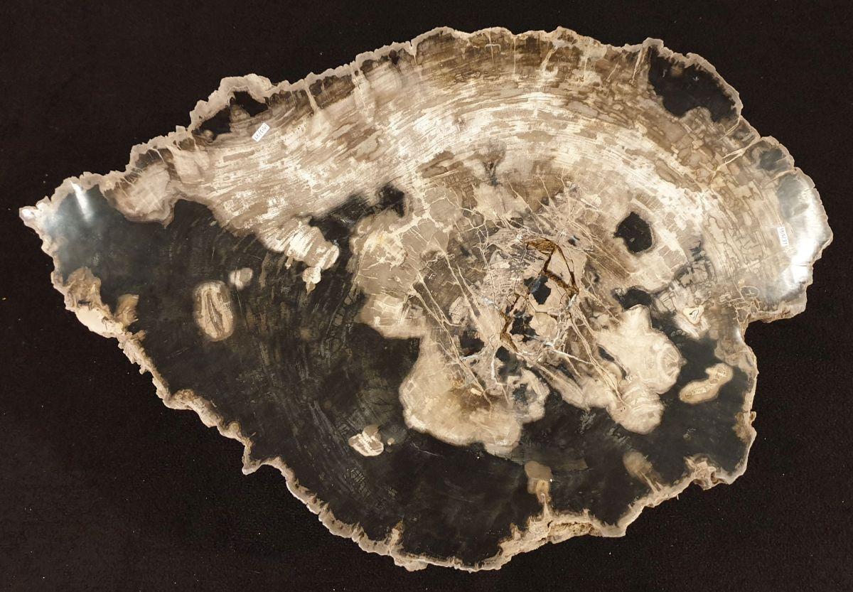 Tavolino legno pietrificato 32241