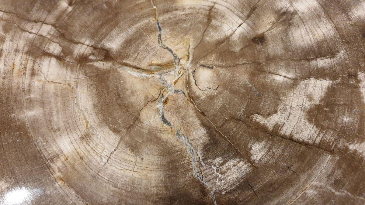 Salontafel versteend hout 32261