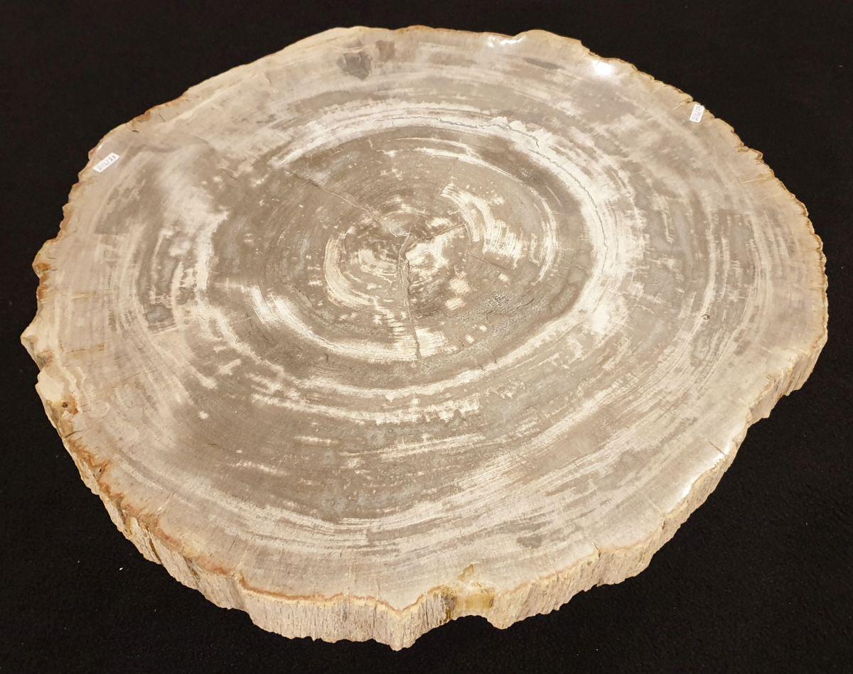 Salontafel versteend hout 32271