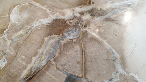 Salontafel versteend hout 32294