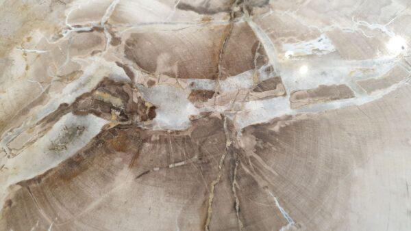 Salontafel versteend hout 32295