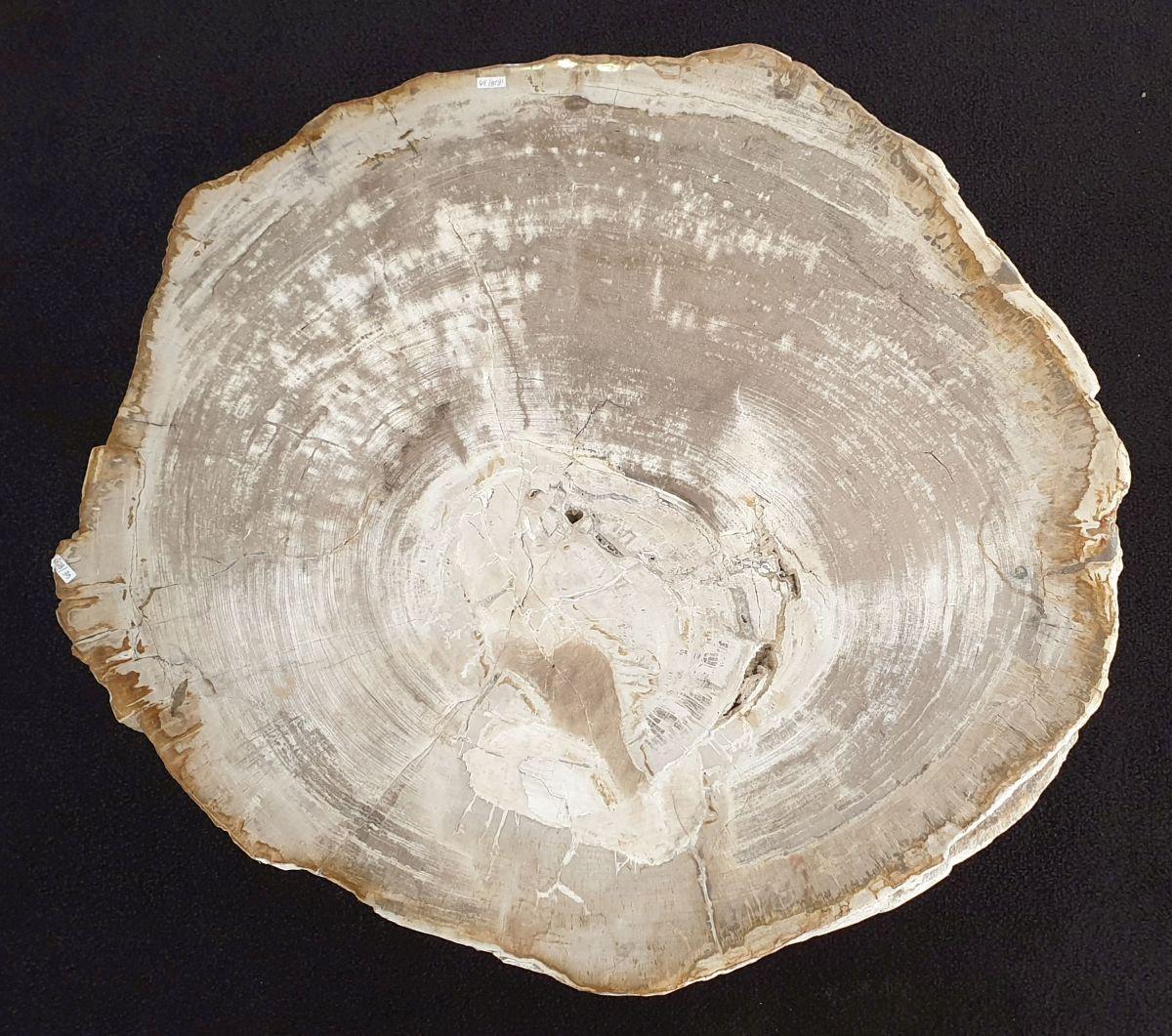 Table basse bois pétrifié 32209