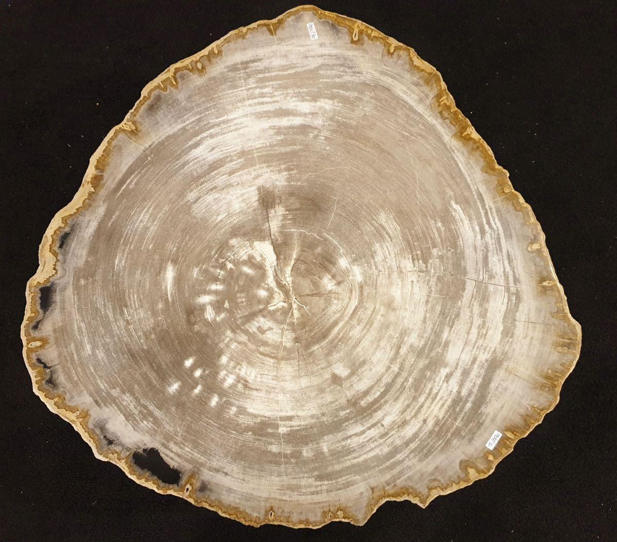 Table basse bois pétrifié 32234