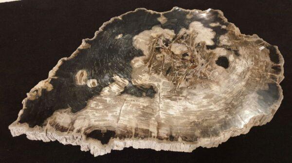 Table basse bois pétrifié 32238