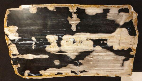 Table basse bois pétrifié 32282