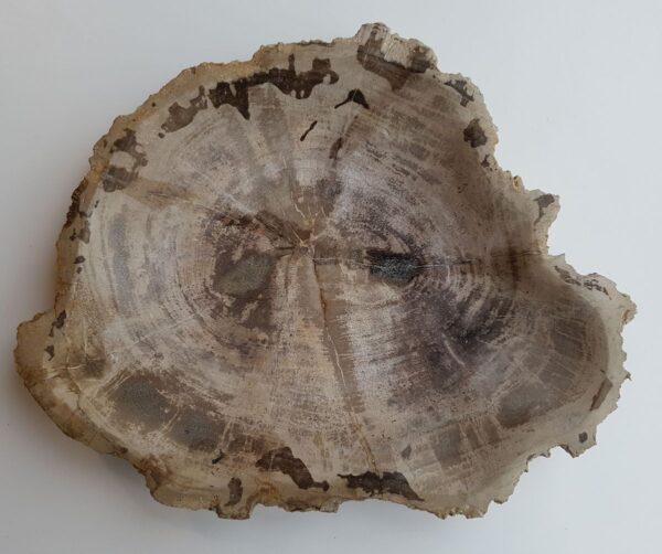 Plato madera petrificada 32091