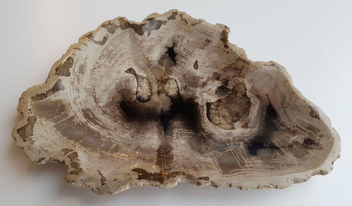 Plato madera petrificada 32093