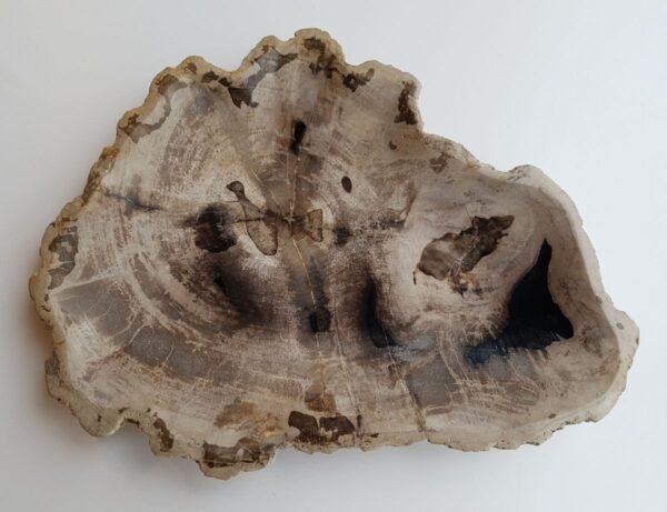 Plato madera petrificada 32094