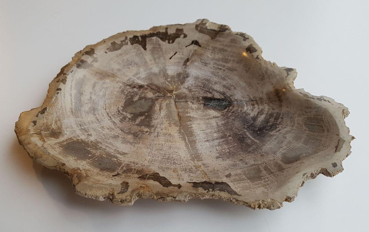 Plate petrified wood 32091