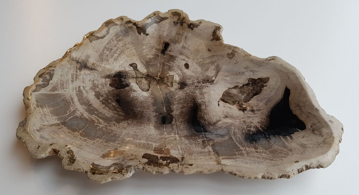 Plate petrified wood 32094