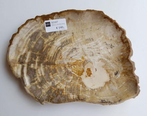 Plate petrified wood 32107