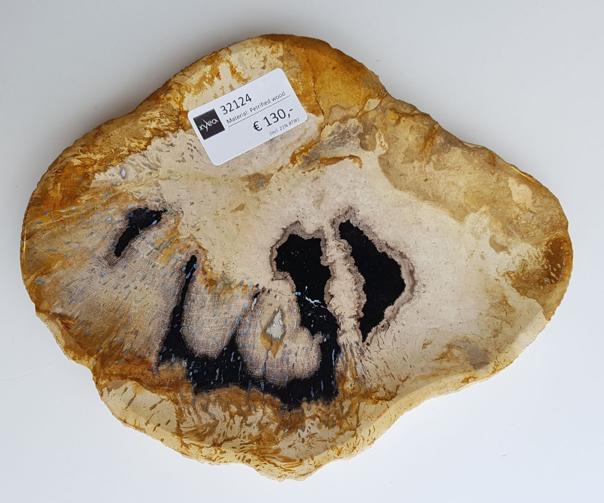 Plate petrified wood 32124