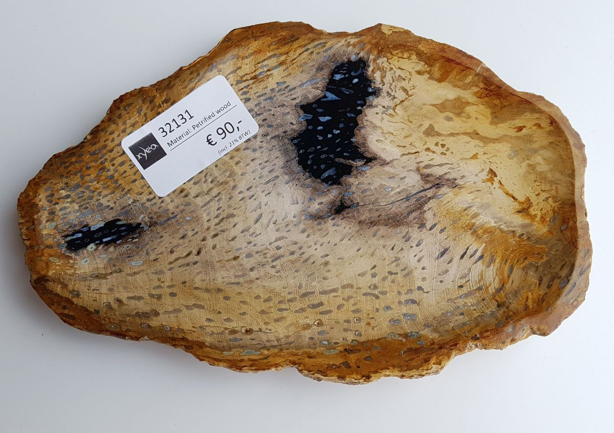 Plate petrified wood 32131