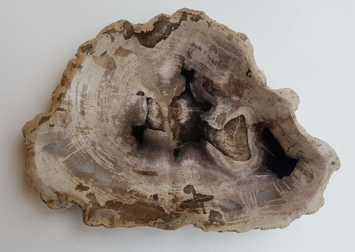 Teller versteinertes Holz 32092