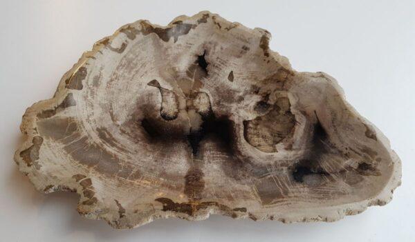 Teller versteinertes Holz 32093