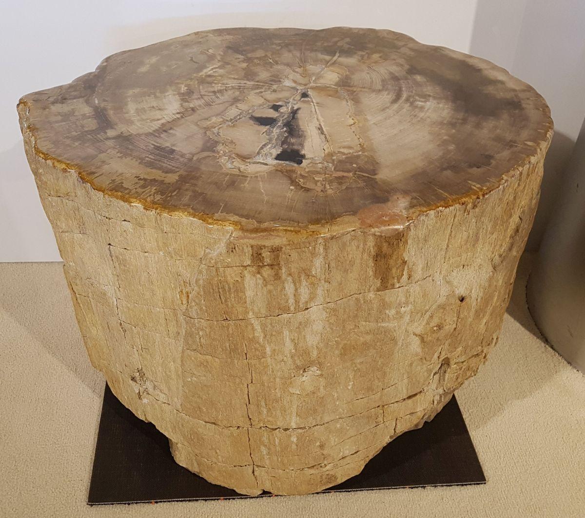 Side table petrified wood 30022
