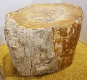 Bijzettafel versteend hout 24137