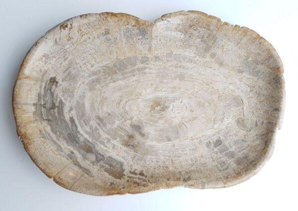 Assiette bois pétrifié 26067