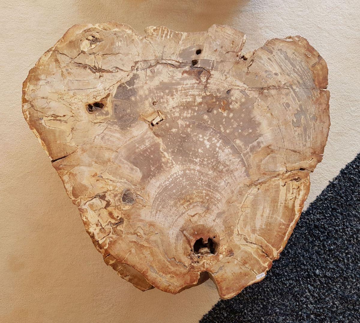 Pierre tombale bois pétrifié 30362