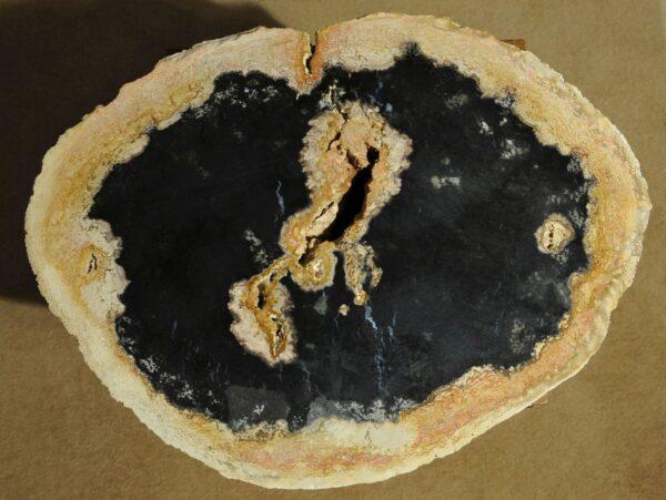 Table basse bois pétrifié 16091