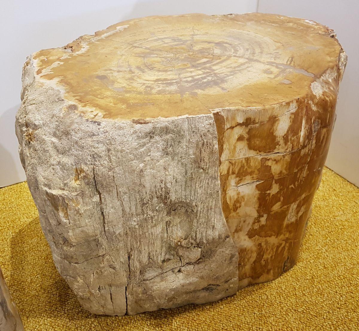 Table d'appoint bois pétrifié 24137