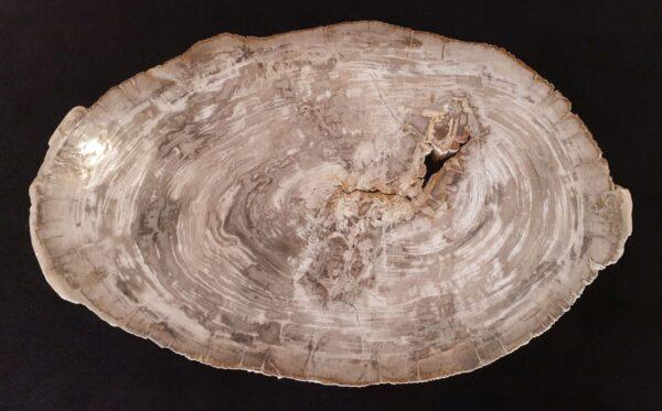Coffee table petrified wood 32182