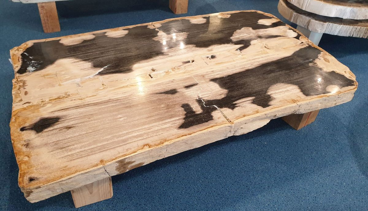 Coffee table petrified wood 32280