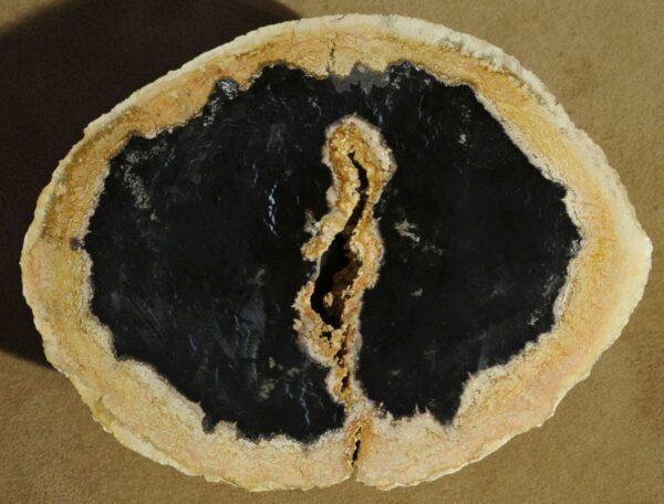 Couchtisch versteinertes Holz 16092