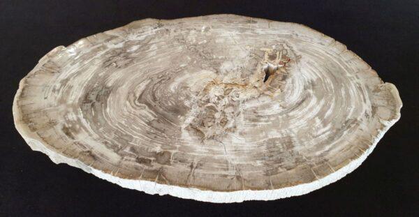Couchtisch versteinertes Holz 32182
