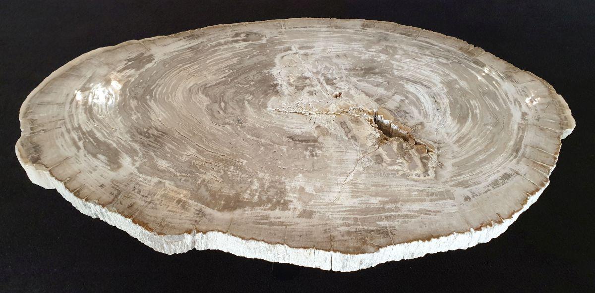 Couchtisch versteinertes Holz 32183