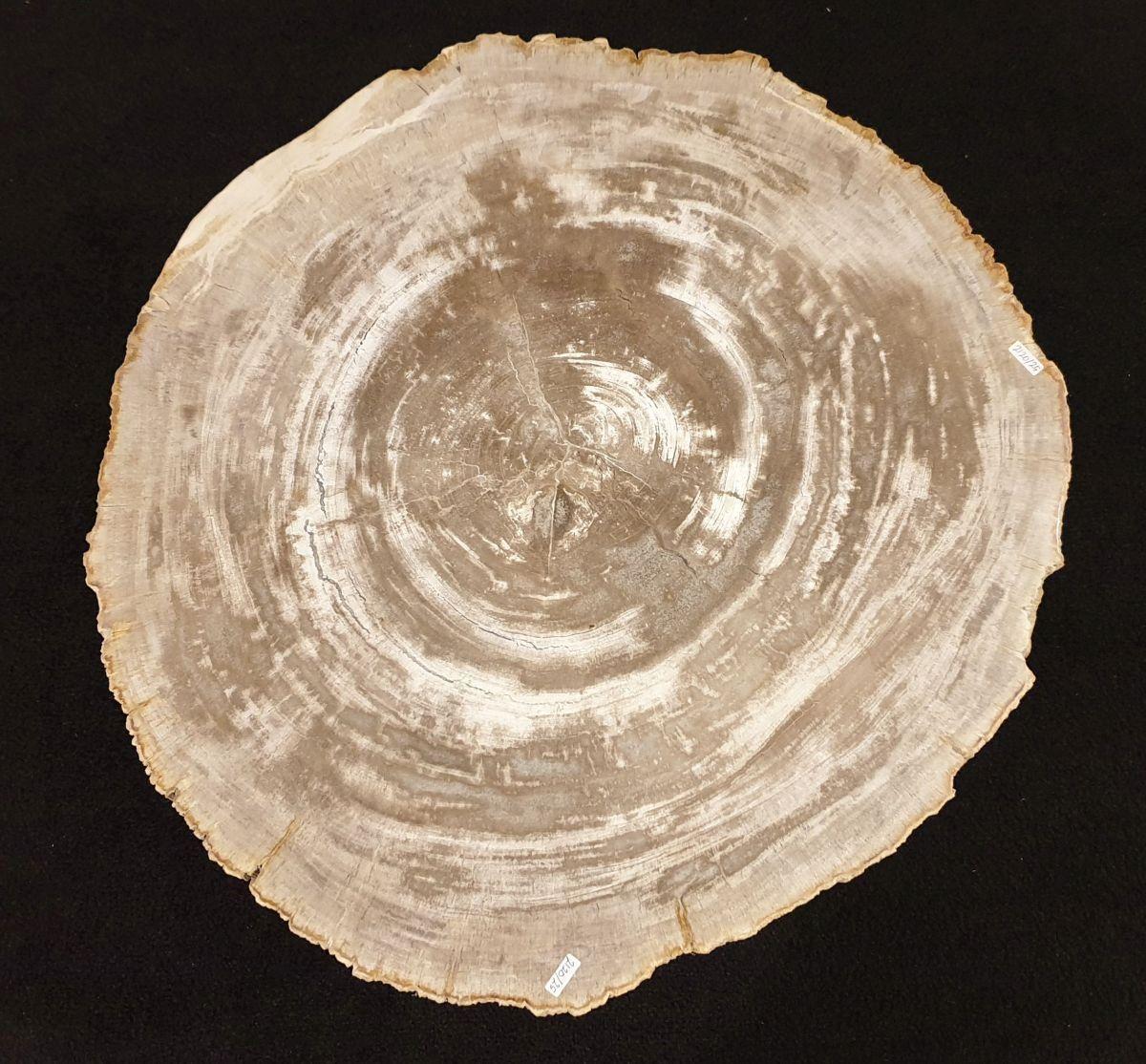 Couchtisch versteinertes Holz 32275