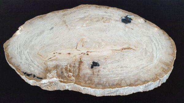 Couchtisch versteinertes Holz 32368