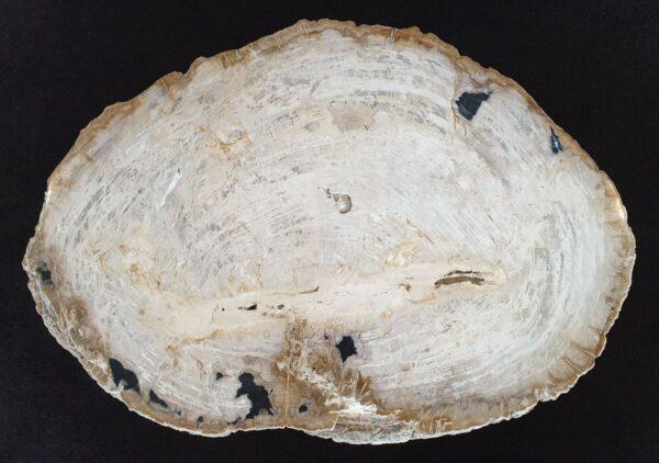 Couchtisch versteinertes Holz 32369
