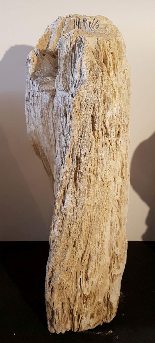 Grabstein versteinertes Holz 29320