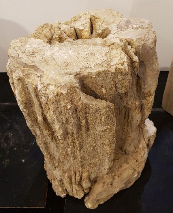 Grabstein versteinertes Holz 30092