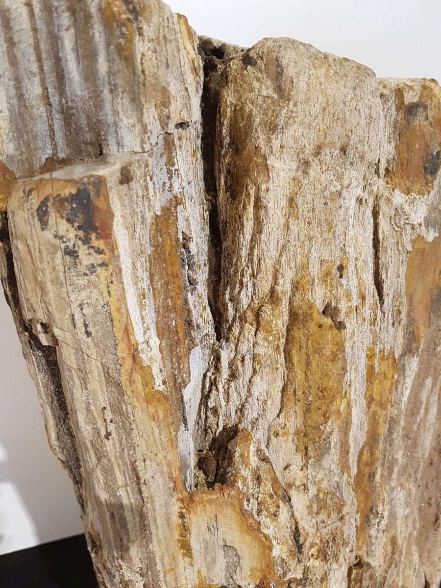 Grabstein versteinertes Holz 31118