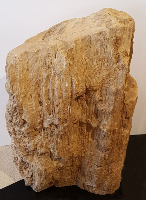 Grabstein versteinertes Holz 32145