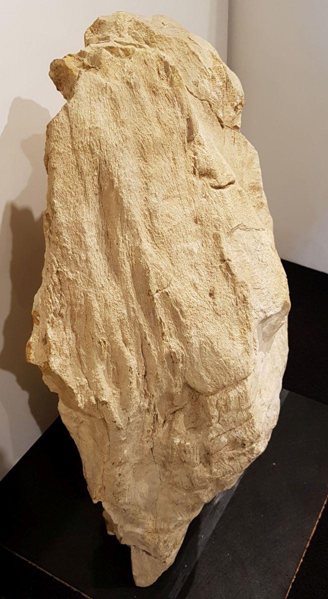 Grafsteen versteend hout 29075